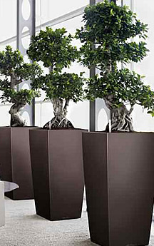 Many Other Plants Will Also Improve Indoor Air Quality. NASA Is Continually  Testing Other Plants. Interior Plantscapers Can Advise On The Best Plants  For ...